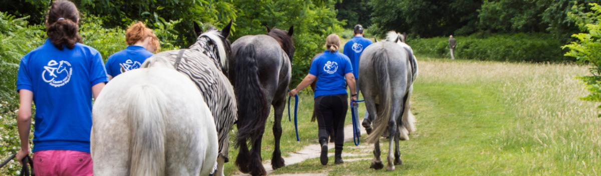 werken in de dagbesteding stichting CAP, Centra voor Aangepast Paardrijden